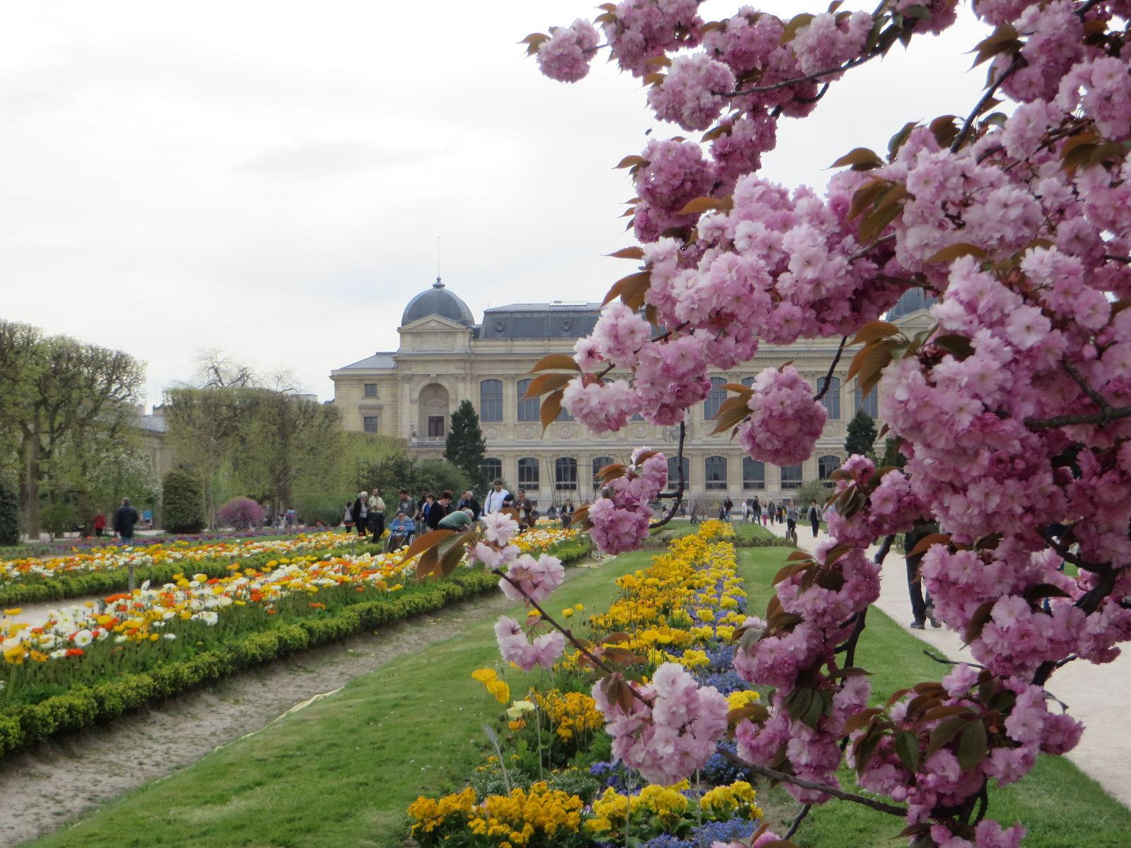 Jardin des plantes - Encyclopedie des fleurs et plantes de jardin ...