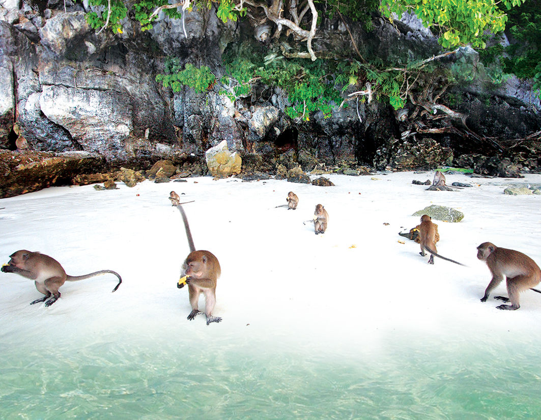 Image result for monkey beach phi phi